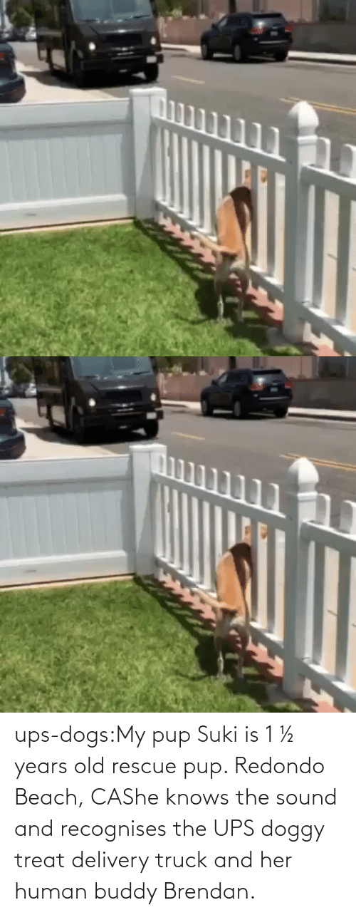 UPS: ups-dogs:My pup Suki is 1 ½ years old rescue pup. Redondo Beach, CAShe knows the sound and recognises the UPS doggy treat delivery truck and her human buddy Brendan.