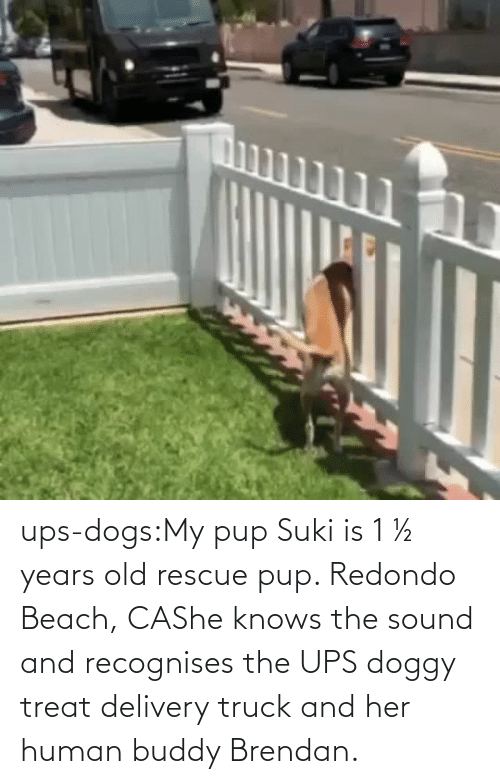 her: ups-dogs:My pup Suki is 1 ½ years old rescue pup. Redondo Beach, CAShe knows the sound and recognises the UPS doggy treat delivery truck and her human buddy Brendan.