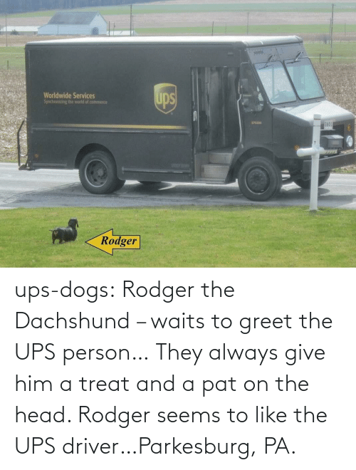 head: ups-dogs:  Rodger the Dachshund – waits to greet the UPS person… They always give him a treat and a pat on the head. Rodger seems to like the UPS driver…Parkesburg, PA.