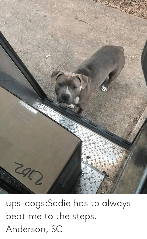 UPS: ups-dogs:Sadie has to always beat me to the steps. Anderson, SC