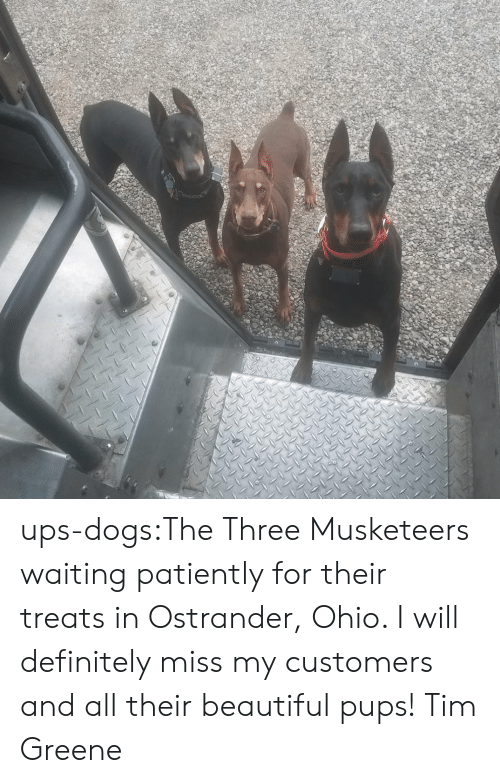 Will Definitely: ups-dogs:The Three Musketeers waiting patiently for their treats in Ostrander, Ohio. I will definitely miss my customers and all their beautiful pups! Tim Greene