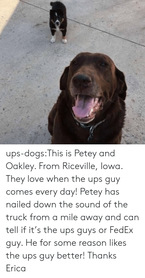 Fedex: ups-dogs:This is Petey and Oakley. From Riceville, Iowa. They love when the ups guy comes every day! Petey has nailed down the sound of the truck from a mile away and can tell if it's the ups guys or FedEx guy. He for some reason likes the ups guy better! Thanks Erica