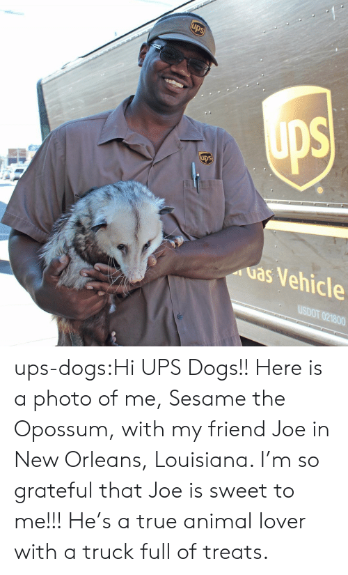 Dogs, Target, and True: ups  uas Vehicle  USDOT 021800 ups-dogs:Hi UPS Dogs!! Here is a photo of me, Sesame the Opossum, with my friend Joe in New Orleans, Louisiana. I'm so grateful that Joe is sweet to me!!! He's a true animal lover with a truck full of treats.