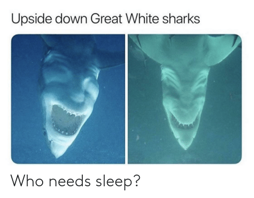great: Upside down Great White sharks Who needs sleep?