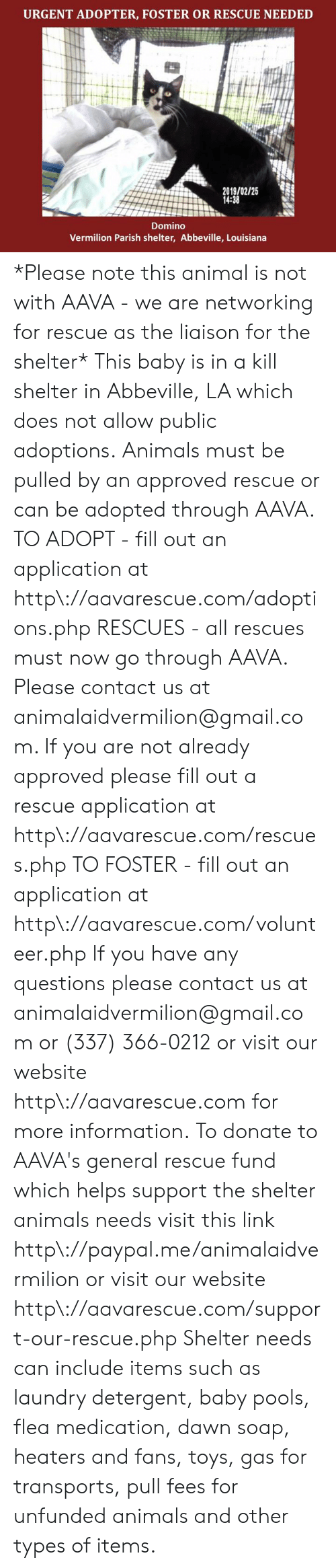 Fill Out: URGENT ADOPTER, FOSTER OR RESCUE NEEDED  2019/02/25  14:38  Domino  Vermilion Parish shelter, Abbeville, Louisiana *Please note this animal is not with AAVA - we are networking for rescue as the liaison for the shelter* This baby is in a kill shelter in Abbeville, LA which does not allow public adoptions. Animals must be pulled by an approved rescue or can be adopted through AAVA.  TO ADOPT - fill out an application at http\://aavarescue.com/adoptions.php  RESCUES - all rescues must now go through AAVA. Please contact us at animalaidvermilion@gmail.com. If you are not already approved please fill out a rescue application at http\://aavarescue.com/rescues.php  TO FOSTER - fill out an application at http\://aavarescue.com/volunteer.php  If you have any questions please contact us at animalaidvermilion@gmail.com or (337) 366-0212 or visit our website http\://aavarescue.com for more information.  To donate to AAVA's general rescue fund which helps support the shelter animals needs visit this link http\://paypal.me/animalaidvermilion or visit our website http\://aavarescue.com/support-our-rescue.php Shelter needs can include items such as laundry detergent, baby pools, flea medication, dawn soap, heaters and fans, toys, gas for transports, pull fees for unfunded animals and other types of items.