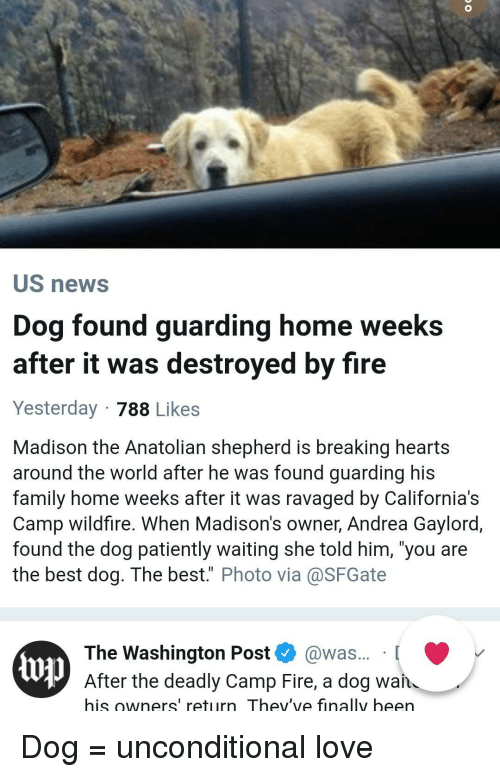 "Family, Fire, and Love: US news  Dog found guarding home weeks  after it was destroyed by fire  Yesterday 788 Likes  Madison the Anatolian shepherd is breaking hearts  around the world after he was found guarding his  family home weeks after it was ravaged by California's  Camp wildfire. When Madison's owner, Andrea Gaylord,  found the dog patiently waiting she told him, 'you are  the best dog. The best."" Photo via@SFGate  The Washington Post @was... [  up  After the deadly Camp Fire, a dog wan  his owners' return Thev've finally been Dog = unconditional love"