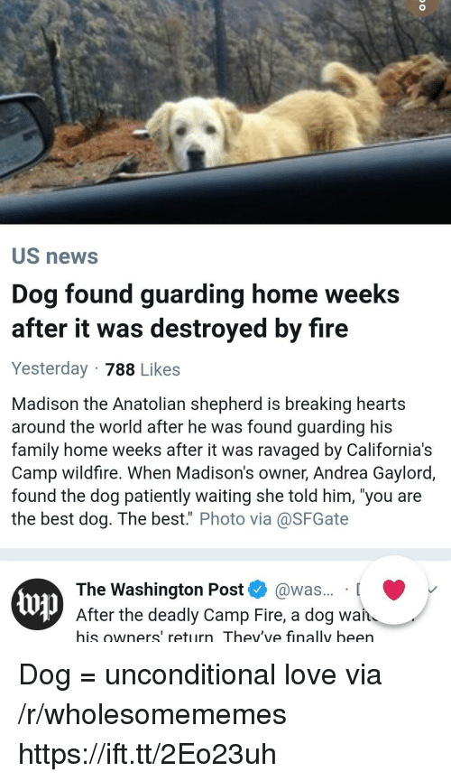 "Family, Fire, and Love: US news  Dog found guarding home weeks  after it was destroyed by fire  Yesterday 788 Likes  Madison the Anatolian shepherd is breaking hearts  around the world after he was found guarding his  family home weeks after it was ravaged by California's  Camp wildfire. When Madison's owner, Andrea Gaylord,  found the dog patiently waiting she told him, 'you are  the best dog. The best."" Photo via@SFGate  The Washington Post @was... [  up  After the deadly Camp Fire, a dog wan  his owners' return Thev've finally been Dog = unconditional love via /r/wholesomememes https://ift.tt/2Eo23uh"