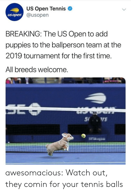 Puppies, Tumblr, and Watch Out: US Open Tennis  @usopern  us open  BREAKING: The US Open to add  puppies to the ballperson team at the  2019 tournament for the first time.  All breeds welcome awesomacious:  Watch out, they comin for your tennis balls