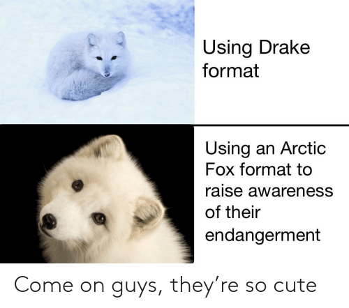 arctic: Using Drake  format  Using an Arctic  Fox format tc  raise awareness  of their  endangerment Come on guys, they're so cute