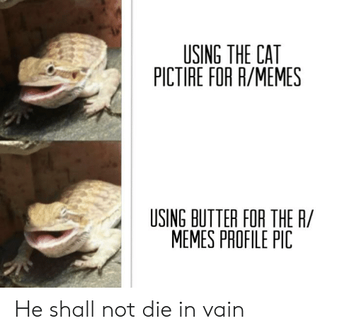 die-in-vain: USING THE CAT  PICTIRE FOR R/MEMES  USING BUTTER FOR THE R/  MEMES PROFILE PIC He shall not die in vain