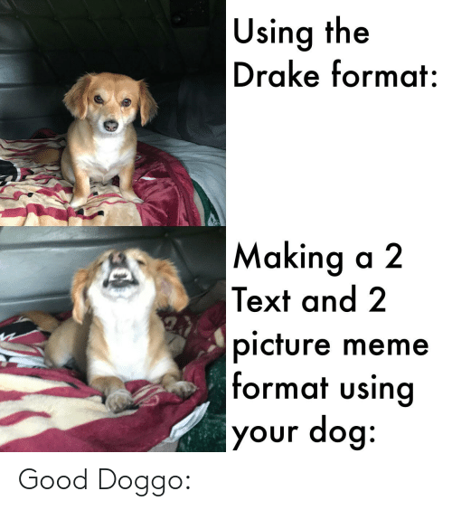 Drake, Funny, and Meme: |Using the  Drake format:  |Making a 2  Text and 2  |picture meme  format using  your dog: Good Doggo: