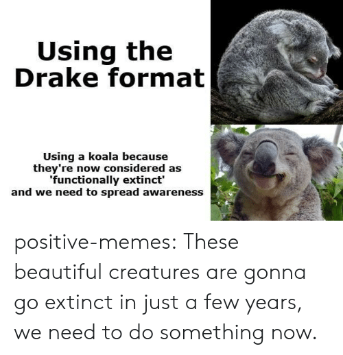 Beautiful, Drake, and Memes: Using the  Drake format  Using a koala because  they're now considered as  functionally extinct'  and we need to spread awareness positive-memes:  These beautiful creatures are gonna go extinct in just a few years, we need to do something now.