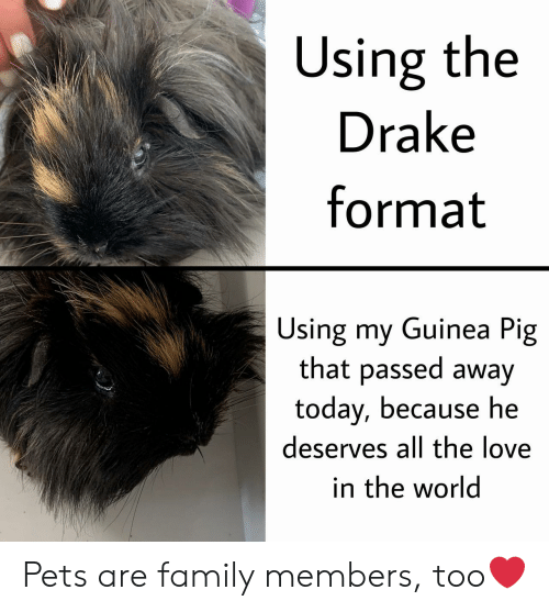 Family Members: Using the  Drake  format  Using my Guinea Pig  that passed away  today, because he  deserves all the love  in the world Pets are family members, too❤️