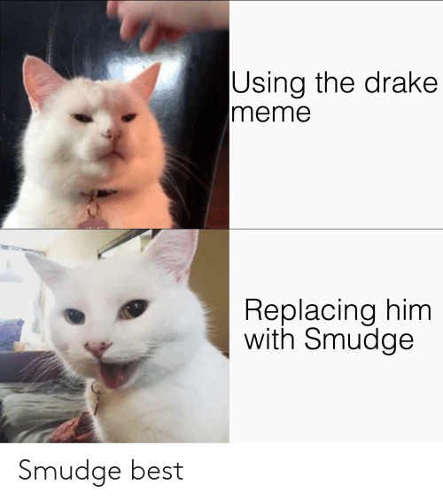 Drake, Meme, and Reddit: Using the drake  meme  Replacing him  with Smudge Smudge best