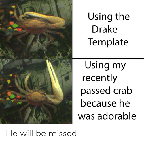 Drake, Reddit, and Adorable: Using the  Drake  Template  Using my  recently  passed crab  because he  was adorable He will be missed