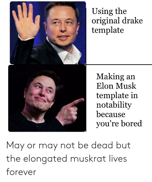 Bored, Drake, and Forever: Using the  original drake  template  Making an  Elon Musk  template in  notability  because  you're bored May or may not be dead but the elongated muskrat lives forever