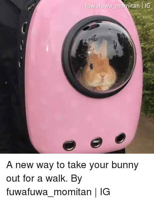 Dank, 🤖, and Bunny: uwafuwa momitan-l IG A new way to take your bunny out for a walk.  By fuwafuwa_momitan | IG