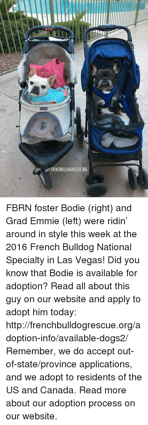 French Bulldogs: v FRENCHBULLDOGRESCUE.ORG FBRN foster Bodie (right) and Grad Emmie (left) were ridin' around in style this week at the 2016 French Bulldog National Specialty in Las Vegas!  Did you know that Bodie is available for adoption? Read all about this guy on our website <location, likes, dislikes> and apply to adopt him today: http://frenchbulldogrescue.org/adoption-info/available-dogs2/   Remember, we do accept out-of-state/province applications, and we adopt to residents of the US and Canada. Read more about our adoption process on our website.