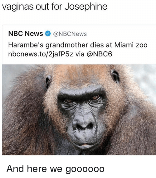 Haramber: vaginas out for Josephine  NBC News ONBCNews  Harambe's grandmother dies at Miami zoo  nbcnews.to/2jafP5z via @NBC6 And here we goooooo