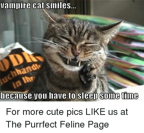 Cat Smiling: vampire cat smiles.  hand  because you have to sleep time  e For more cute pics LIKE us at The Purrfect Feline Page