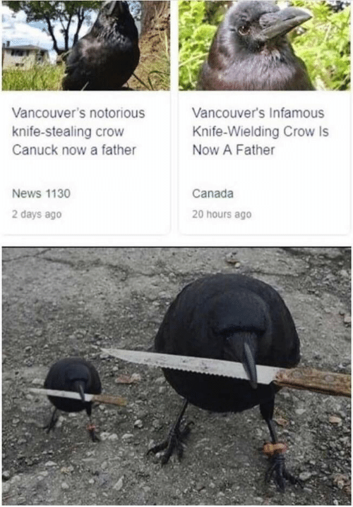 notorious: Vancouver's Infamous  Vancouver's notorious  knife-stealing crow  Knife-Wielding Crow Is  Canuck now a father  Now A Father  News 1130  Canada  2 days ago  20 hours ago