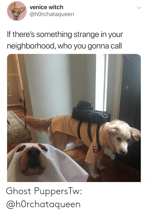 Ghost, Witch, and Venice: venice witch  @hOrchataqueen  If there's something strange in your  neighborhood, who you gonna call Ghost PuppersTw: @h0rchataqueen