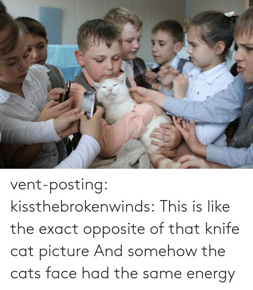 Cats: vent-posting:  kissthebrokenwinds: This is like the exact opposite of that knife cat picture  And somehow the cats face had the same energy