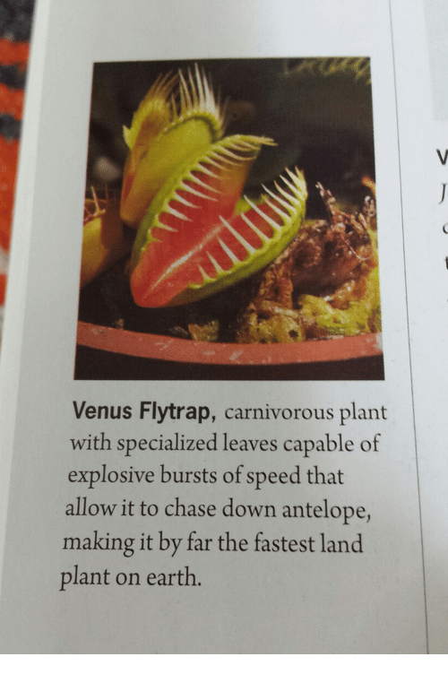 carnivorous: Venus Flytrap, carnivorous plant  with specialized leaves capable of  explosive bursts of speed that  allow it to chase down antelope,  making it by far the fastest land  plant on earth.