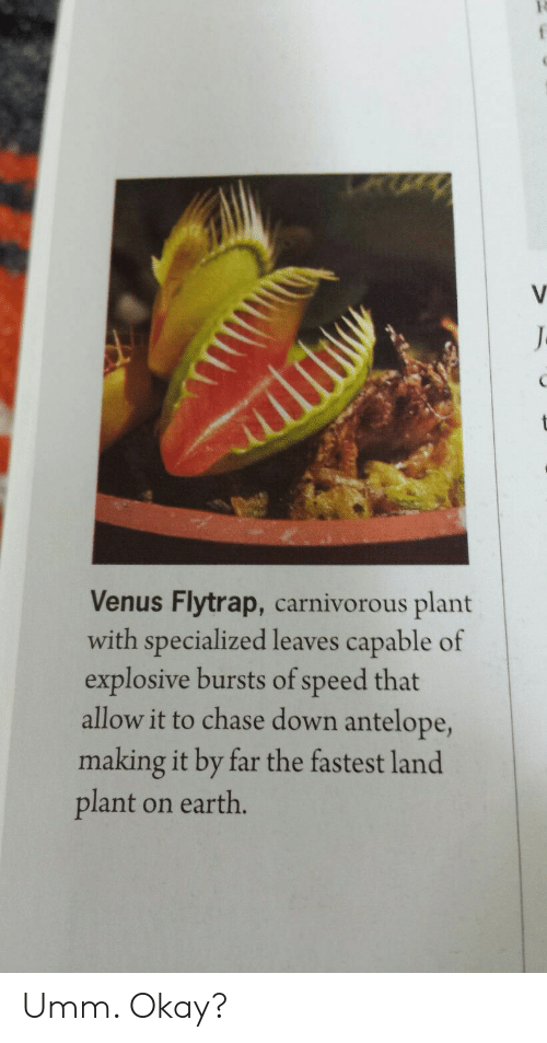 carnivorous: Venus Flytrap, carnivorous plant  with specialized leaves capable of  explosive bursts of speed that  allow it to chase down antelope,  making it by far the fastest land  plant on earth. Umm. Okay?