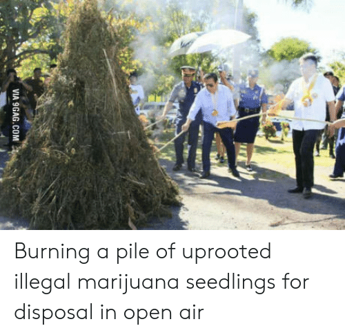 Disposal: VIA 9GAG.COM Burning a pile of uprooted illegal marijuana seedlings for disposal in open air