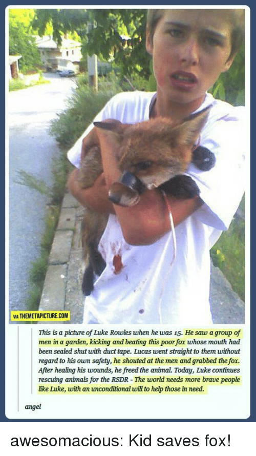 Animals, Saw, and Tumblr: VIA THEMETAPICTURE.COM  This is a picture of Luke Rowles when he was 15. He saw a group of  men in a garden, kicking and beating this poor fox whose mouth had  been sealed shut with duct tape. Lucas went straight to them without  regard to his own safety, he shouted at the men and grabbed the fox.  After healing his woumds, he freed the animal. Today, Luke continues  rescuing animals for the RSDR - The world needs more brave people  ike Luke, with an unconditional will to hep those in need.  angel awesomacious:  Kid saves fox!