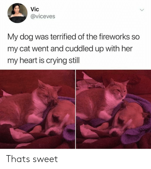 Crying, Fireworks, and Heart: Vic  @viceves  My dog was terrified of the fireworks so  my cat went and cuddled up with her  my heart is crying still Thats sweet