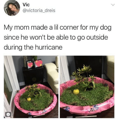 the hurricane: Vic  @victoria dreis  My mom made a lil corner for my dog  since he won't be able to go outside  during the hurricane
