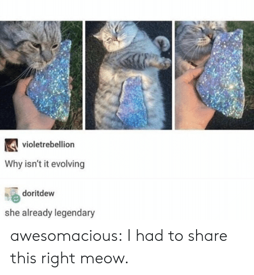 Tumblr, Blog, and Http: violetrebellion  Why isn't it evolving  doritdew  she already legendary awesomacious:  I had to share this right meow.