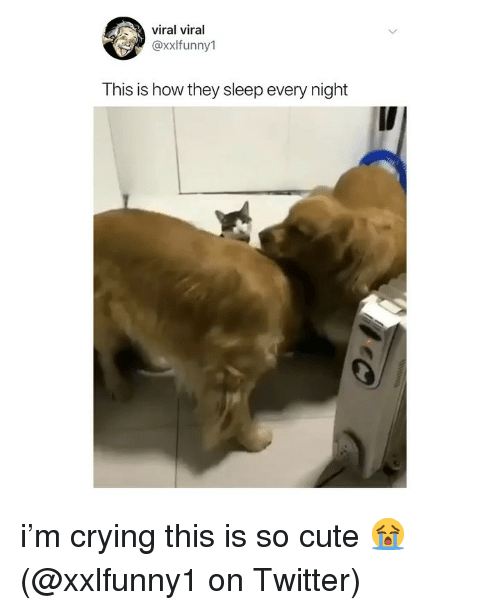 Crying, Cute, and Memes: viral viral  axxlfunny1  This is how they sleep every night i'm crying this is so cute 😭 (@xxlfunny1 on Twitter)