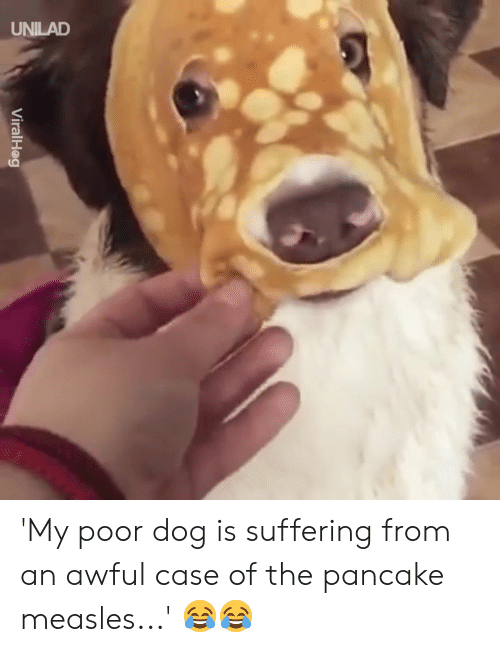 Dank, Suffering, and 🤖: ViralHag 'My poor dog is suffering from an awful case of the pancake measles...' 😂😂