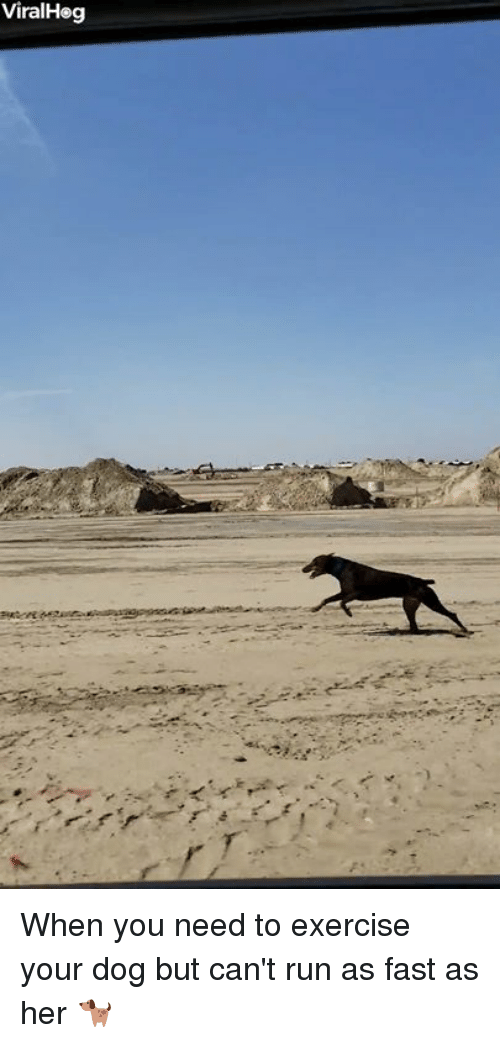 Run, Exercise, and Her: ViralHeg When you need to exercise your dog but can't run as fast as her 🐕