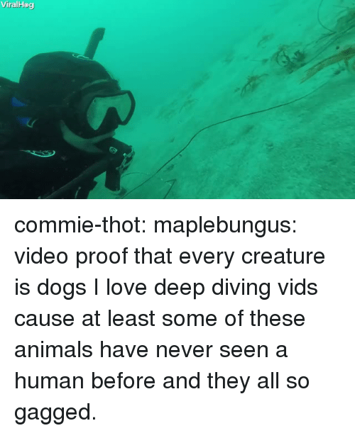 gagged: ViralHog commie-thot:  maplebungus: video proof that every creature is dogs  I love deep diving vids cause at least some of these animals have never seen a human before and they all so gagged.