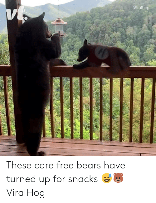 Bears, Free, and For: Viralhog These care free bears have turned up for snacks 😅🐻  ViralHog
