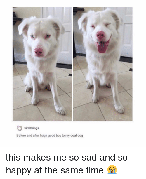 Me So Sad: viralthings  Before and after I sign good boy to my deaf dog this makes me so sad and so happy at the same time 😭