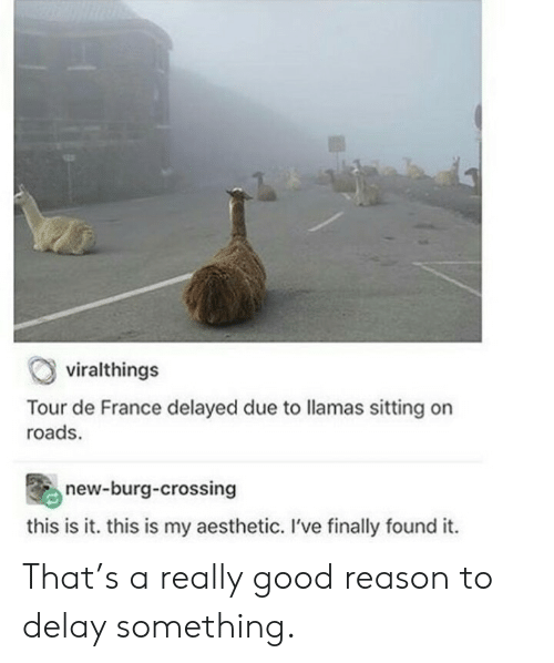 Delayed: viralthings  Tour de France delayed due to llamas sitting on  roads.  new-burg-crossing  this is it. this is my aesthetic. I've finally found it. That's a really good reason to delay something.
