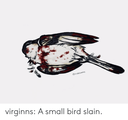 Tumblr, Blog, and Com: @VIRGINNS virginns:  A small bird slain.