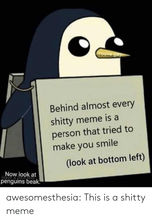 Is A: Voure gay  Behind almost every  shitty meme is a  person that tried to  make you smile  (look at bottom left)  Now look at  Have  penguins beak. awesomesthesia:  This is a shitty meme