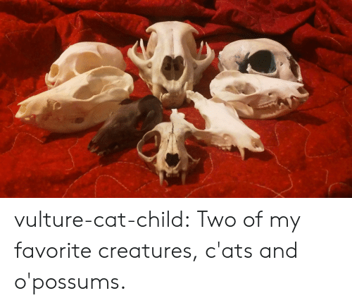 Vulture: vulture-cat-child: Two of my favorite creatures, c'ats and o'possums.