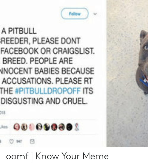 Craigslist, Facebook, and Meme: w  A PITBULL  REEDER, PLEASE DONT  FACEBOOK OR CRAIGSLIST  BREED. PEOPLE ARE  NNOCENT BABIES BECAUSE  ACCUSATIONS. PLEASE RT  THE #PITBULLDROPOFF ITS  DISGUSTING AND CRUEL  000v00es oomf | Know Your Meme