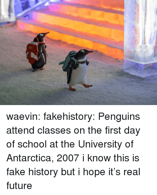 first day of school: waevin: fakehistory: Penguins attend classes on the first day of school at the University of Antarctica, 2007 i know this is fake history but i hope it's real future