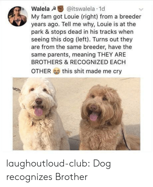 Club, Fam, and Parents: Walela,a  @itswalela. 1d  My fam got Louie (right) from a breeder  years ago. Tell me why, Louie is at the  park & stops dead in his tracks when  seeing this dog (left). Turns out they  are from the same breeder, have the  same parents, meaning THEY ARE  BROTHERS & RECOGNIZED EACH  OTHER  this shit made me cry laughoutloud-club:  Dog recognizes Brother