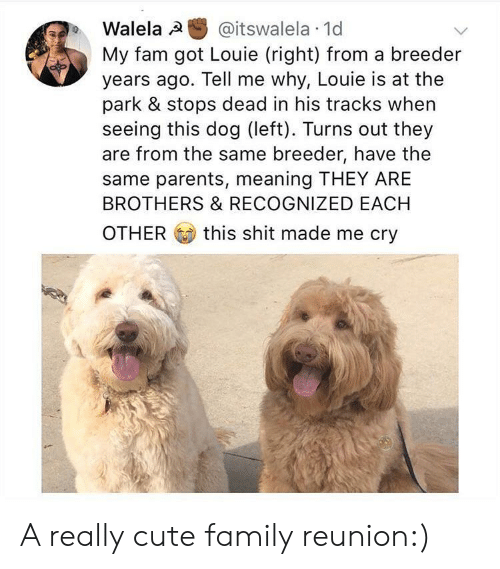 Cute, Fam, and Family: Walela @itswalela 1d  My fam got Louie (right) from a breeder  years ago. Tell me why, Louie is at the  park & stops dead in his tracks when  seeing this dog (left). Turns out they  are from the same breeder, have the  same parents, meaning THEY ARE  BROTHERS & RECOGNIZED EACH  OTHER this shit made me cry A really cute family reunion:)