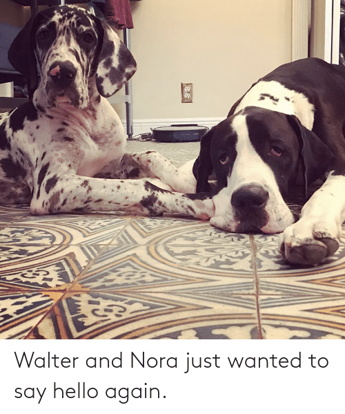 nora: Walter and Nora just wanted to say hello again.