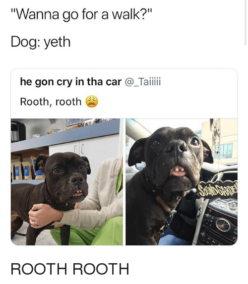 """Wanna Go For A Walk: """"Wanna go for a walk?""""  Dog: yeth  he gon cry in tha car@_Taiii  Rooth, rooth ROOTH ROOTH"""